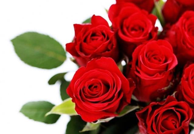 Não tem presente melhor! Buquê de 12 rosas + Folhagens + Embalagem em celofane e laço + Gypsophila por R$45 na Fujiflores
